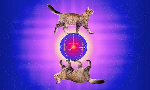 error-correcting cat concept, illustration
